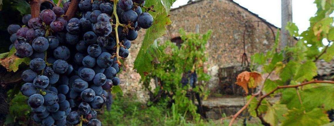 Wine-Tour-Sicily