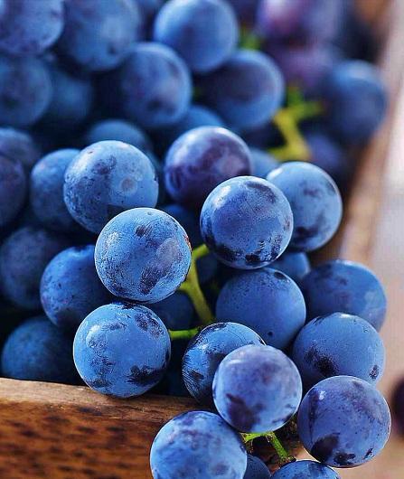 Vin de Sicile, dégustation Etna vin