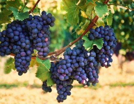 Vin sicilienne