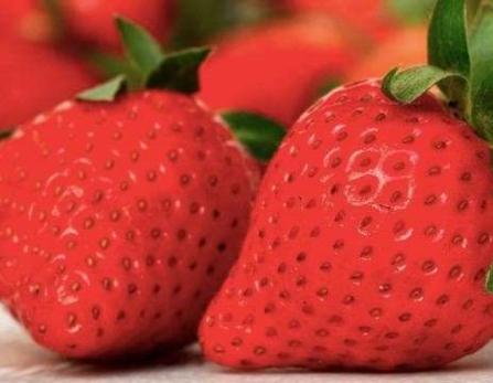 Fête fraise Sicile