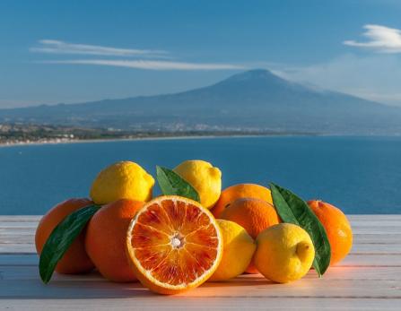 liqueur-oranges-citrons-etna-sicile-etna3340