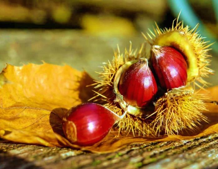visiter la sicile en automne - que faire en sicile automne - ETNA3340